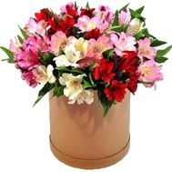 Alstroemeria in the box - flowers and bouquets on flora.lg.ua