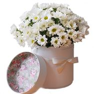 Chamomile in box - flowers and bouquets on flora.lg.ua